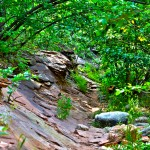 Canopy - West Fork: Trail 108 [06.14.2013]