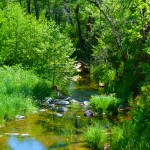 Not The River, But The Stream – West Fork: Trail 108 [06.14.2013]